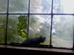 black cat outside broken window