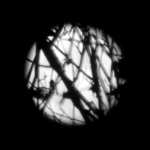 Moon with Branches