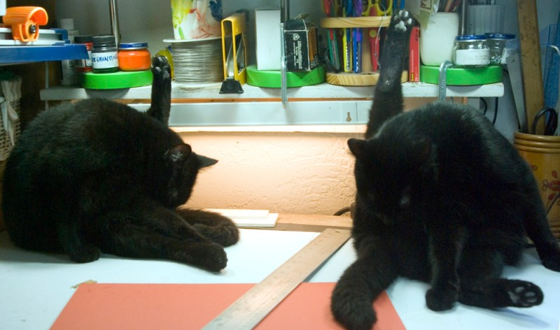 two black cats washing butts