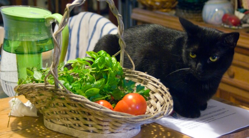 black cat by basket with herbs and vegetables