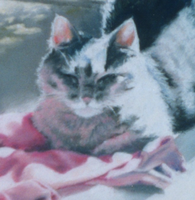 portrait of gray cat with pink sweater
