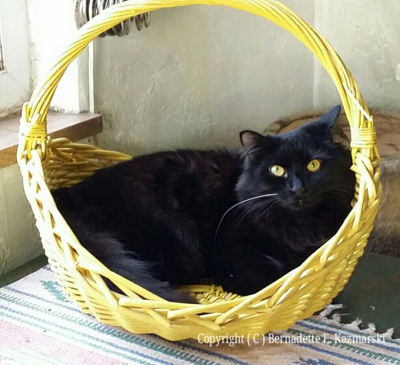 Basil in his basket.