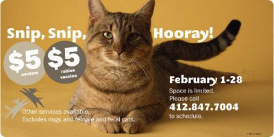 low-cost neuter at animal friends