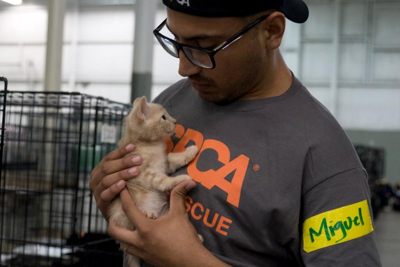 Aspca continues to help hundreds of animals displaced by hurricane aspca volunteer comforts a kitten in the aspca duncan sc emergency shelter copyright m4hsunfo
