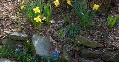 Allegro's garden