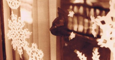 sepia photo of a cat with snowflakes