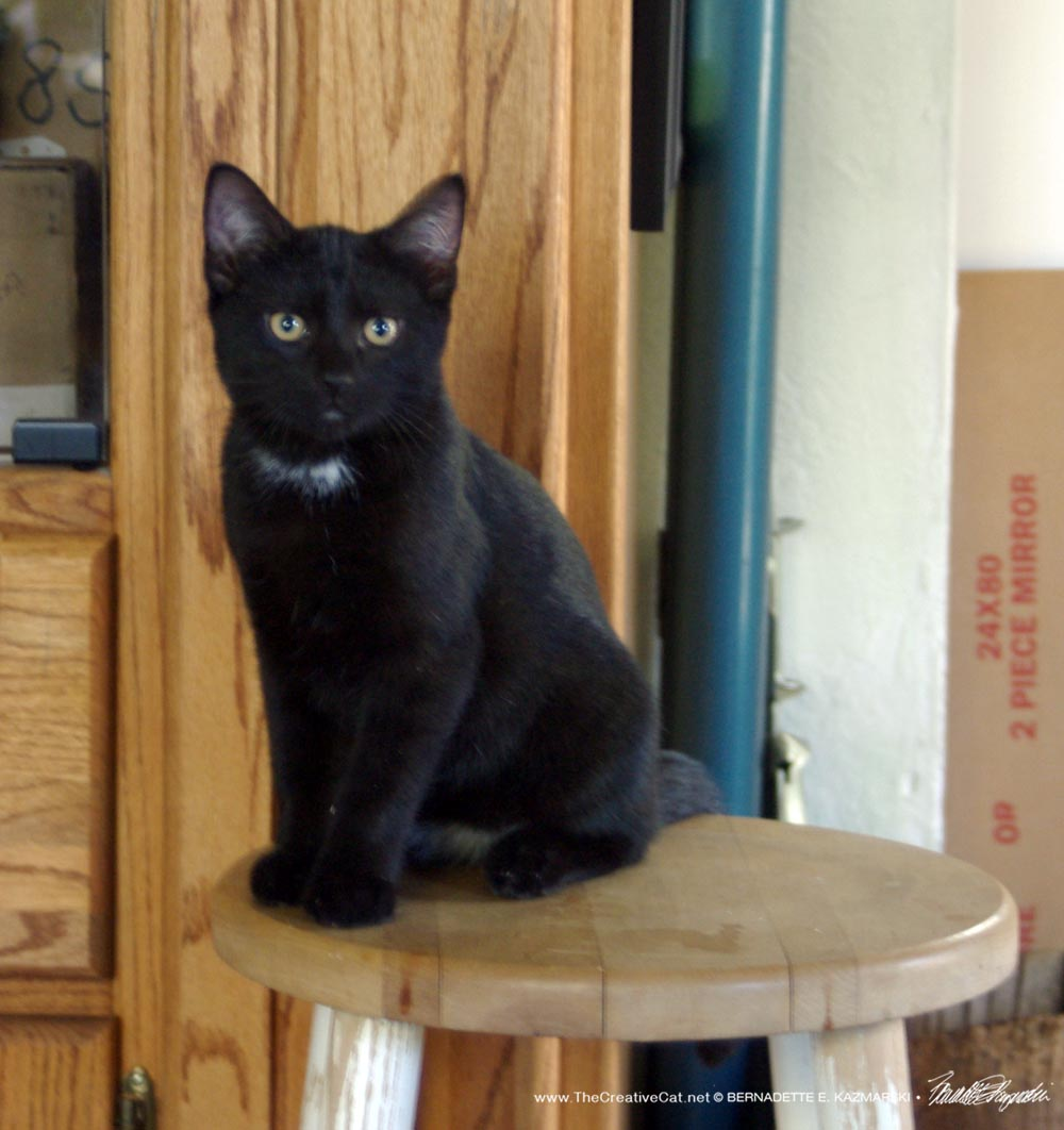 black kitten on stool