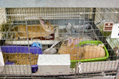 Bunnies for adoption.