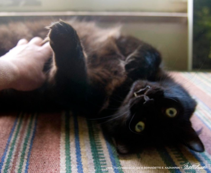 black cat with belly rub