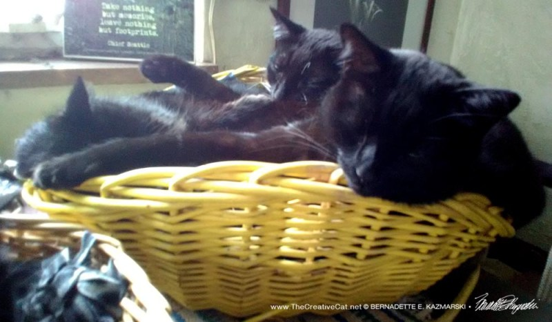 three black cats in yellow basket