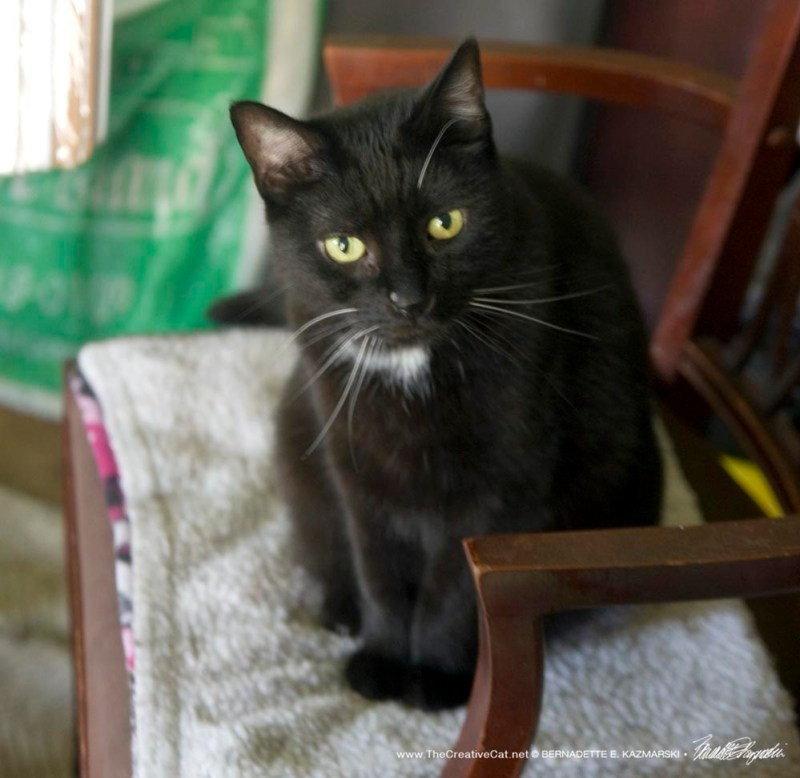 black cat on chair