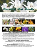 guide to common plants toxic to pets