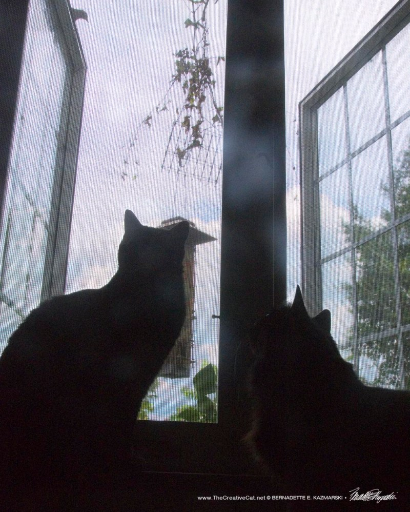 two black cats at window