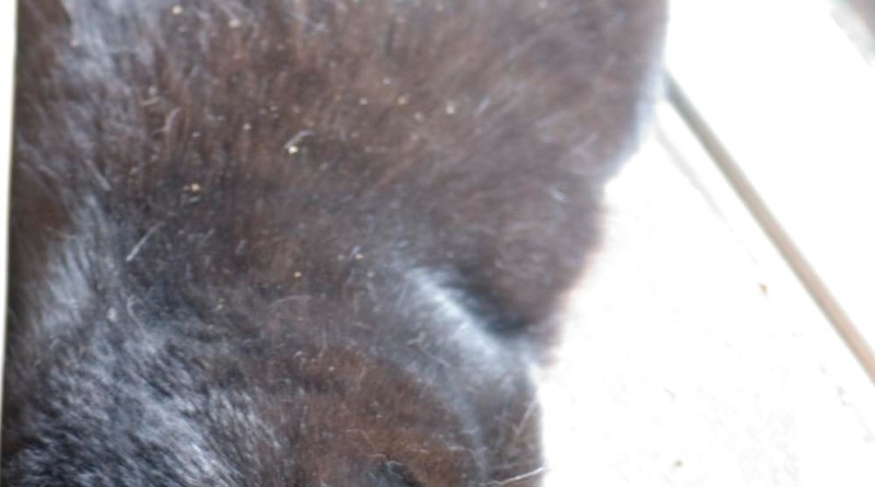 black cat by door