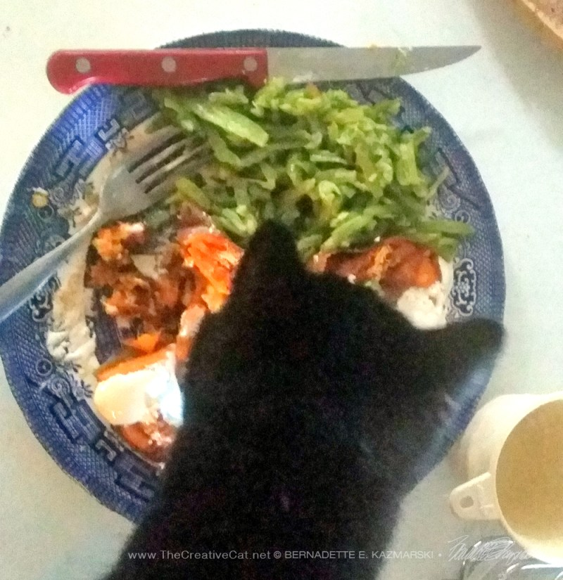 black cat with plate