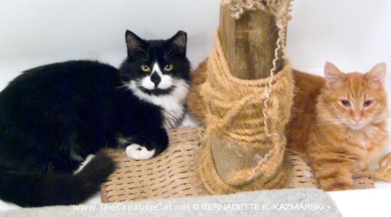 black and white cat and orange cat