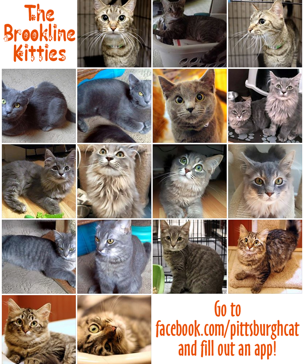 Cats for Adoption: The Brookline Kitties are Up For Adoption
