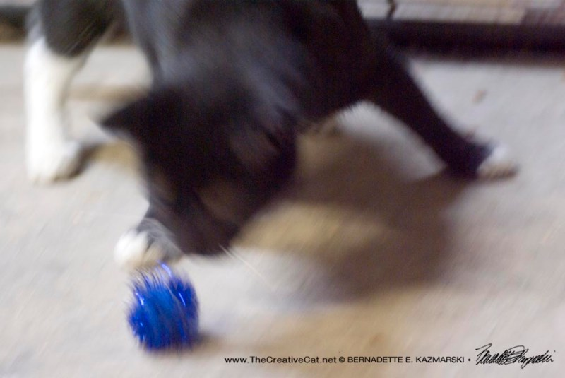 Chasing that blue sparkle ball!
