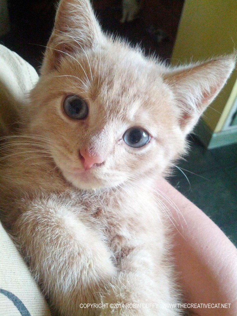 orange kitten in pink towle