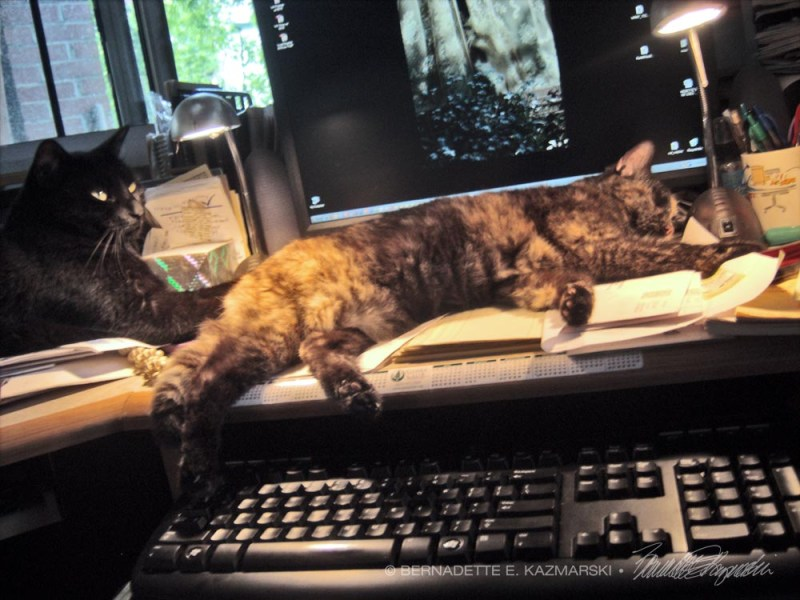 tortoiseshell cat on desk