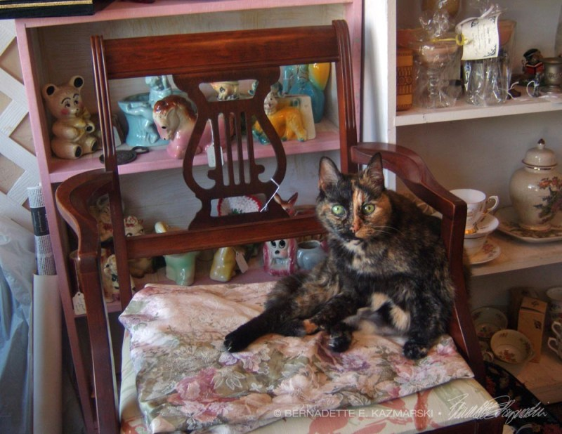 tortoiseshell cat on chair