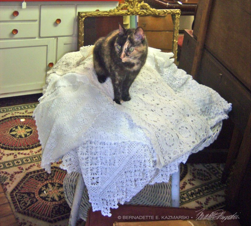 tortoiseshell cat on tablecloths
