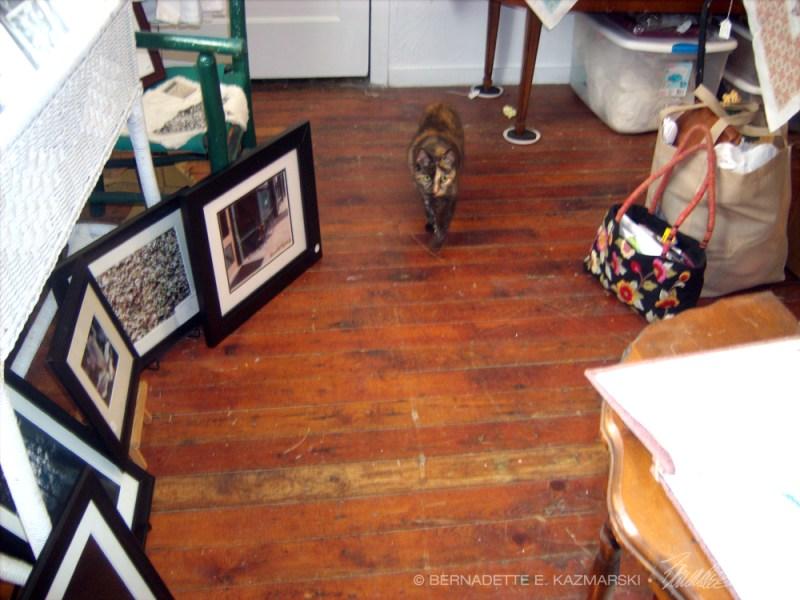 tortoiseshell cat in shop