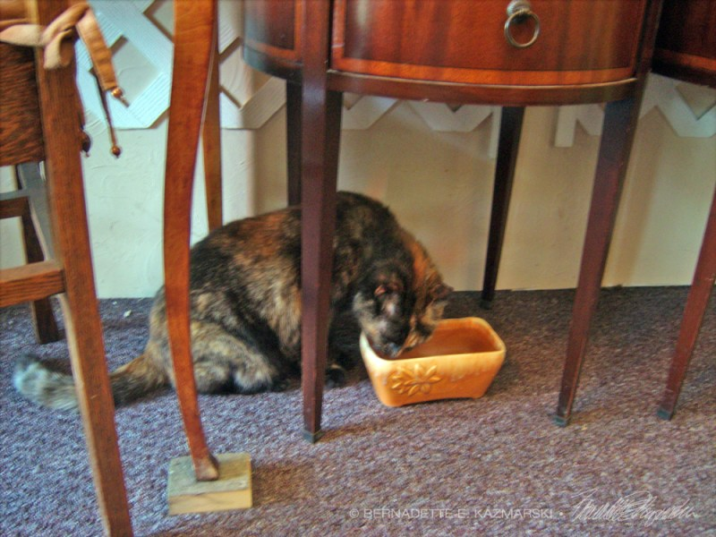 cat drinking from water bowl