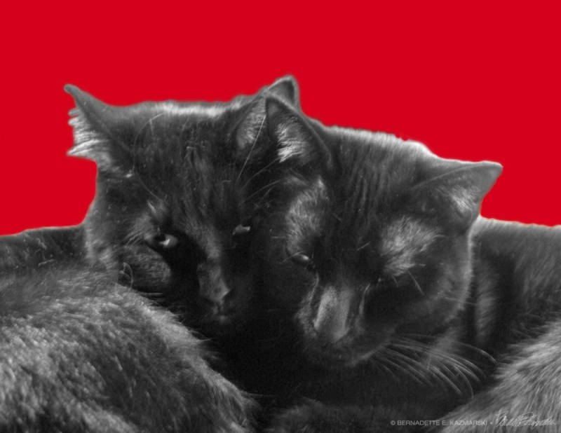 valentine card with two black cats hugging