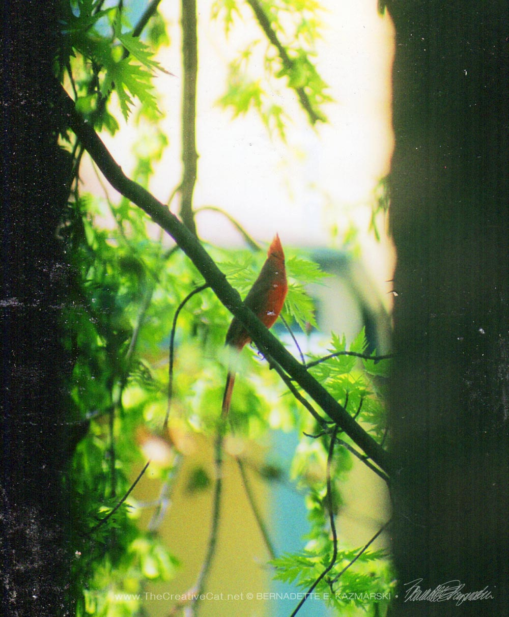 A cardinal seen between the porch pillar and a tree.