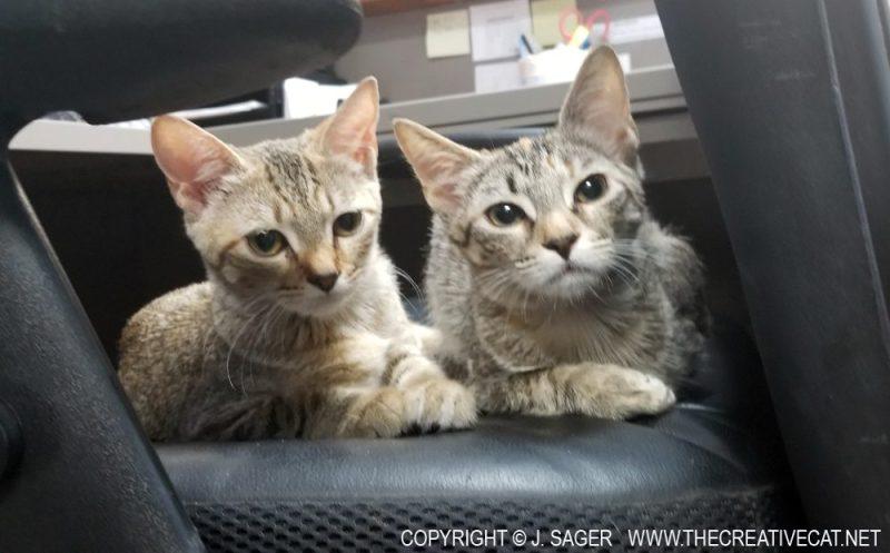 Luna and Cat Stevens.