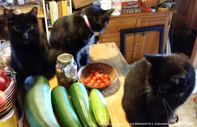 Cats are still wondering about this vegetable thing.