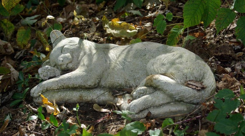 stone kitty marker