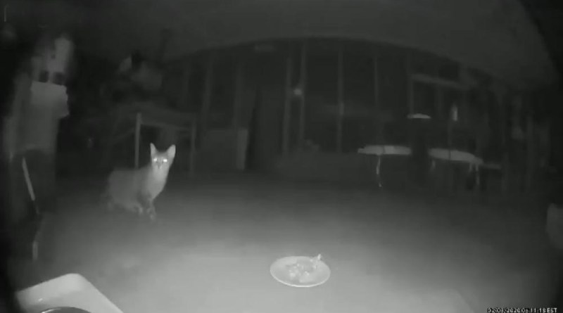 cat on video clip