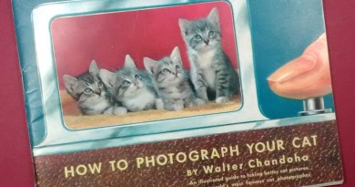 How to Photograph Your Cat by Walter Chandoha