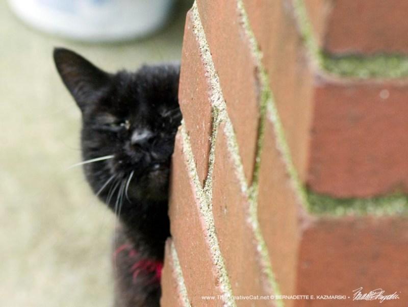 black cat rubbing face