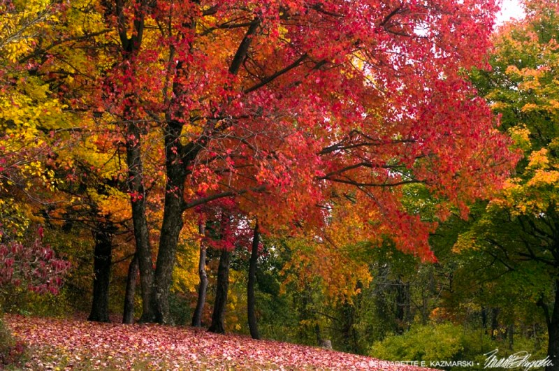 colorful grove of trees
