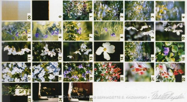 Contact print from April 2004 photos.
