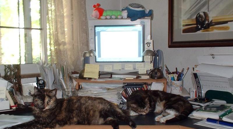 Cookie and Stanley own my desk.