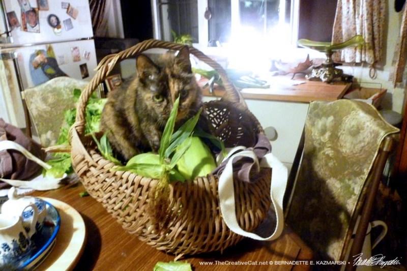 July-Cookie Picks Sweet Corn