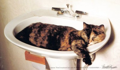Cookie in the sink, a perfect fit (it was a very small sink).