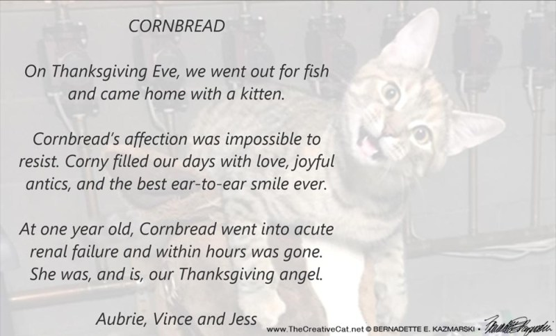 a tribute to a cat at the pet memorial sunday pet loss ceremony