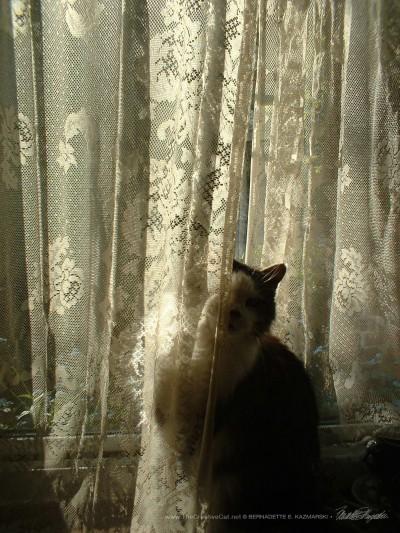 Sophie peeking around the curtain #1