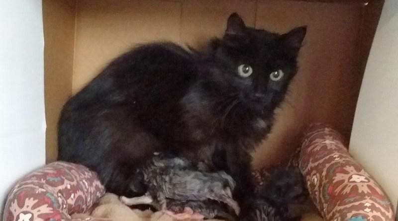 Black kitty mom 1.