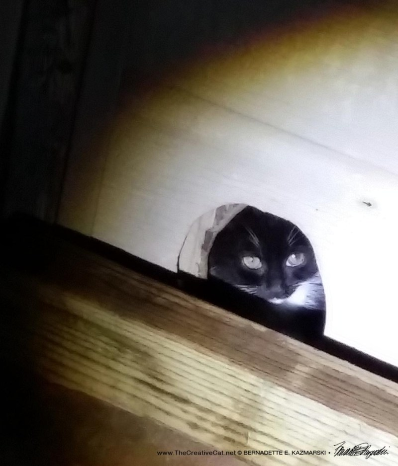 The tux kitten watches us.