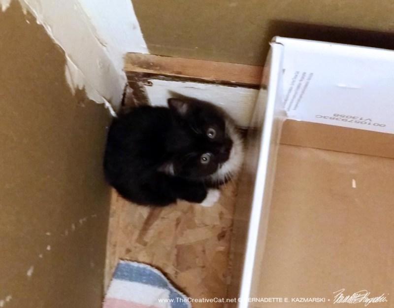 The little tux kitten in his special hiding spot.