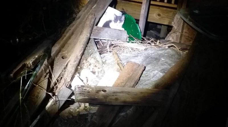 The gray and white kitten in the spotlight.