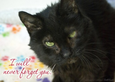 sympathy card with black cat