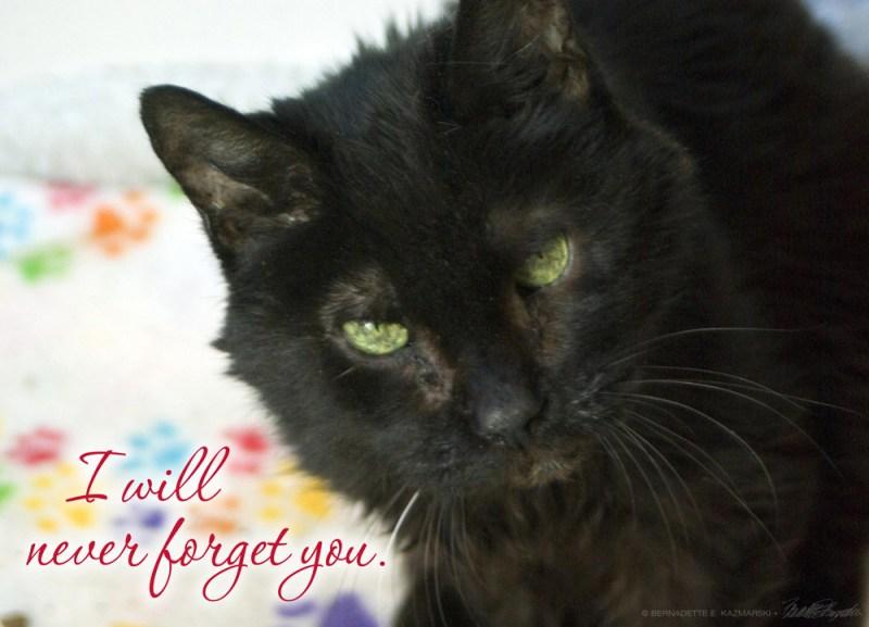 sympathy card with black cat