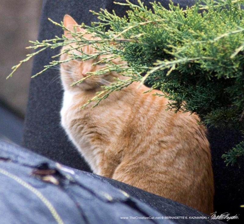orange cat by bush